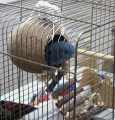 NUBS: No Unwanted Bird Squad July 2015 (huntleyareapl) Tags: gallery nubs childrensprogram huntleyareapubliclibrary