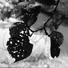 Who did this? Who made the holes?? (keinidyll) Tags: summer bw nature leaves visionqualitygroup