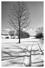 paysage de neige (delaunay_vincent) Tags: neige golf noirblanc nature