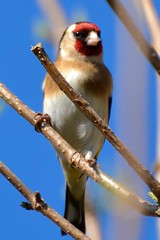 The Goldfinch by Donna Tartt (Mags McLaren) Tags: 7daysofshooting week27 abooktitle shootanythingsaturday