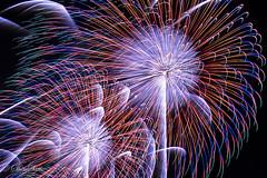夜空に開く大輪 (shin4433) Tags: nikond500 fireworks dynamic 大人の宿題 japan color aya tokina atx 1120mm f28 pro dx