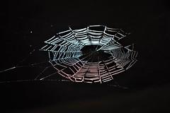 "Spider ""house"" . Anavilhanas -Amazon forest - Brazil (Cassio Piccolo) Tags: spider aranha preto black teia bug inseto"