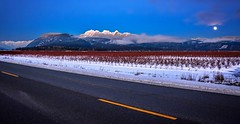 Full moon rising (Images by Christie ♪♫ Happy Clicks for 2017 !) Tags: winter mountains goldenearsmountain cranberrybushes cranberries field moon fullmoon snowmoon cold evening road street snowpeakedmountains bluehour