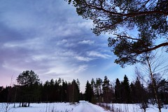 Purple and blue (photolumba [insta: photo_lumba]) Tags: outdoor sky serene plant pine tree road purple blue winter christmas finland oulu kiiminki sony zeiss batis25mm 25mm batis