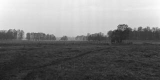 Grazing fields in mist