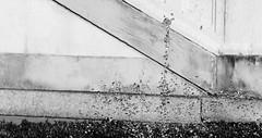 Gravity (ChiaraThiriel) Tags: gocce acqua biancoenero monocromatico drops