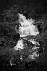 Triplet Falls (Trace Connolly) Tags: australia australian canon canon7d blackandwhite blackandwhitephotography bw environmentalphotography exposure flickr greatoceanroad hiking landscape longexposure light movement monochromephotography nature naturephotography native nationalpark otwayrangesnationalpark otwayranges park river sigma sigma1750f28exdcoshsm sigma1750mm timeexposure tree trees ferns water waterfalls waterfall whitewater whiteandblack tripletfalls victoria traceconnolly