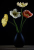 New Years Poppies (Funchye) Tags: flowers poppies poppy nikon d610 105mm