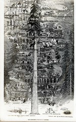 The Redwood's Parallel in History CA (Edge and corner wear) Tags: vintage postcard pc realphoto rp sequoia redwood tree history ca california timeline historic events world global corporate company exhibit 1940s 40s 1945 visualizing information historical