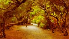 Steam Shaped Forest (PhotonenBlende) Tags: waiotapu rotorua newzealand neuseeland taupovolcaniczone forest wald trees bäume red rot green grün path weg enchanted fabolous märchenhaft dreamy verträumt nature natur landscape landschaft jungle urwald nikond50 tamronsp outdoor