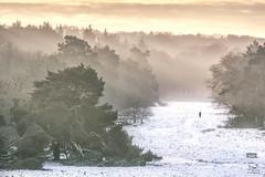 Another day at the office (Bram de Jong) Tags: snow light backlight trees human landscape nikon heather westerheide serene sunrise fog sunrays gelderland