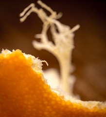 Clementine Peel (glo <Taking a break>) Tags: gloriasalvanteglophotography macromondays clementine fruit itsapeelingtome macro orange peel pith