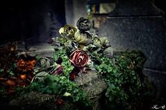 Cimetière de Montmartre_2582 (Sleeping Spirit) Tags: cimetière montmartre cemetary cemetaries