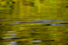 Dreamy late afternoon on Lake Pilchicocha (Ken Pick) Tags: amazonbasin lakepilchicocha travel reflections southamerica lake ecuador naporiver sachalodge canoeing 100xthe2017edition 117picturesin2017 100x2017 image2100 abstract