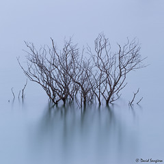 Solitude. (dasanes77) Tags: canoneos6d landscape waterscape longexposure trees water calm tranquility navarra reservoir abstract shadows sunrise morning mist fog tripod nature