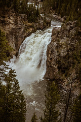 river, waterfall, wyoming, scenery, scenic, upper, water, national, travel, gorge, forest, falls, rock, mountain, america, yellowstone national park, cascade, landscape, wilderness, stream, rapids, upper falls, beauty, rocky, nature, flow, tourism, beauti (http://fineartamerica.com/profiles/robert-bales.ht) Tags: travel bridge wild cliff usa mountain west fall tourism nature water beautiful beauty yellow rock pine america forest river landscape flow waterfall nationalpark scenery montana stream famous fineart scenic rocky grand canyon falls spray rapids upper national valley western yellowstonenationalpark gorge yellowstone states wyoming geology lower wilderness overlook volcanic cascade breathtaking yellowstoneriver upperfalls geological geologic robertbales