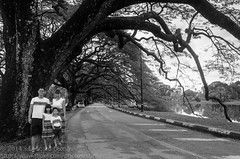 Lake garden road (Stinkee Beek) Tags: erin ethan malaysia leonard taiping perak lakegarden my yewyen