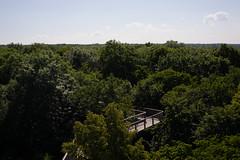 Canopy Walkway (martinstelbrink) Tags: nature zeiss forest germany 50mm thüringen sony thuringia treetops wald unescoworldheritage planar treetop carlzeiss zm f20 canopywalkway baumkronen unescowelterbe nationalparkhainich baumkronenpfad a7r zeissplanar50mmf20 weltnaturerbe worldnatureheritage alpha7r voigtländervmeclosefocusadapter