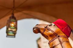 Moroccan Camel (Andrea Maiale) Tags: china summer vacation italy france sunshine norway japan america 35mm germany mexico amusement orlando epcot florida candid parks disney mickey tokina disneyworld sweets minnie nikkor magickingdom animalkingdom downtowndisney morrocco mouseears 55200mm 18g 1116mm nikond5000