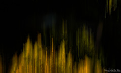 Future tense (Maurizio Scotsman De Vita) Tags: natura foresta foglie trunks landscape astrazioni nature abstract plantsflowers italia panorama fall alberi trees boschi abstractions abruzzo parconazionaledabruzzolazioemolise civitellaalfedena forest paesaggio leaves tronchi parks autunno autumn woods parchi astratto impressionistic impressionistico pnalm