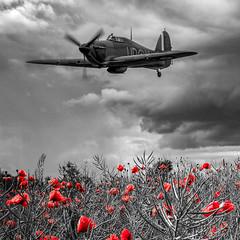 POP0002 (Smart Aviation Art) Tags: poppy poppies poppyfield poppyfields lancaster vulcan avro spitfire hurricane aircraft military bbmf
