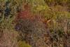 Cynorrhodon et camouflage (Patrice Baud) Tags: cerfélaphe cervuselaphus cerf cervus mammifère herbivore montagne wild sauvage reddeer deer hirsch ciervo pyrénées cerdagne nikon d7100 nikkor300f4 cynorrhodon