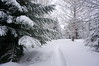 DSC02265_ (aleksey1971) Tags: siberia altai belokurikha winter nature forest landscape tree snow сибирь алтай белокуриха зима природа пейзаж лес снег