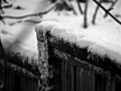 Good Neighbors (~nevikk~) Tags: fence wood iceandsnow backyards bw kevinkelly neighbors windowshot