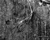 Muliya_Zade_Roots_web (Bhaumik Trivedi) Tags: bhaumiktrivedi bhaumiktrivediphotography wwwbhaumiktrivedicom bharatiyaphotographer indianphotographers canon india roots wall rootsonwall