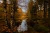 Creative (*Capture the Moment*) Tags: 2016 autumn bavaria bayern bäume deutschland germany hackensee herbst himmel lakehackensee landschaften reflection reflections reflexion sky sonya7m2 sonya7mii sonya7mark2 sonya7ii sonyfe2470mmf4zaoss spiegelung trees