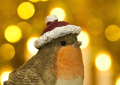Macro Mondays-Holiday Bokeh (Roger Brown (General)) Tags: macromondays holidaybokeh robin christmas macro indoors tinsel lights close up