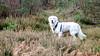 Charlie 41 weeks old (Mark Rainbird) Tags: dog powershots100 puppy canon retriever ufton uk charlie uftonnervet england unitedkingdom gb