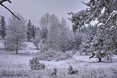 Turnbull (jimgspokane) Tags: turnbullwildliferefuge winter snow washingtonstate otw