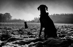 encounter (Dan-Schneider) Tags: streetphotography street silhouette dog monochrome mood blackandwhite bw light olympus nature solitude