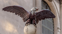 Eagle watching over Grand Central (brucenmurray) Tags: statue eagle grandcentral gct grandcentralterminal nyc