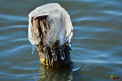 A-LUR_5644 (ornessina) Tags: trasimeno umbria byrd uccelli aironi cormorani toscana va orcia