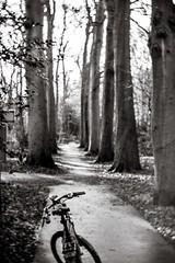 One less car! (Peter Branger) Tags: activeassignmentweekly bicycle road trees goodintentions blackwhite daguerreotypeachromat bestofweek1 bestofweek2 bestofweek3 bestofweek4