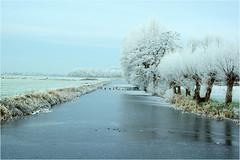 frozen.......... (atsjebosma) Tags: sneeuw bevroren frozen ducks eenden sheep schapen landscape winterlandschap january atsjebosma 2017 jonkersvaart groningen nederland thenetherlands trees bomen ijs ice knotwilgen cold koud vriezen