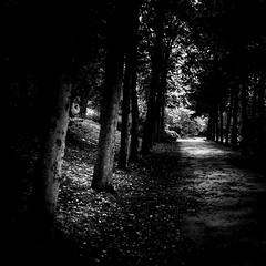 (Nico_1962) Tags: leica m8 summarit rangefinder zwolle nederland zwartwit bw leicam primelens manualfocus path laan trees bomen vierkant square