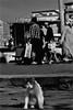 dci_010 (la_imagen) Tags: türkei karaköy turkey türkiye turquía istanbul istanbullovers sokak sw bw blackandwhite siyahbeyaz  monochrome strasenfotografieistkeinverbrechen street streetandsituation streetlife streetphotography katze cat kedi