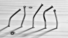 five sisters (dr_scholz@ymail.com) Tags: nail nails finishingnail crooked five pine wood shadow lightandshadow canon5dmkii zeissaposonnart2135 aposonnart2135 canonextensiontube macro closeup blackwhite blackandwhite