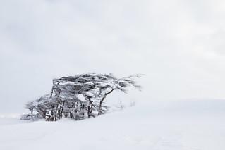 Northern minimalism