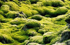 Iceland (ClaDae) Tags: iceland europe natur stone sand air smoke landscape panorama fantastic geographic desolated nature colors world earth scenery travel green lakagigar northatlanticocean nordicisland island travelphotography 3000v120f