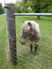 Beloit, WI, Pony (Mary Warren (7.9+ Million Views)) Tags: beloitwi nature fauna animal mammal pony