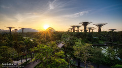 Return To Innocence (t3cnica) Tags: city sky sun architecture sunrise landscapes intense singapore downtown glow cityscapes structure sunburst dri haida sunstar marinabay dynamicrangeincrease exposureblending digitalblending humanelement leefilter gardensbythebay supertrees