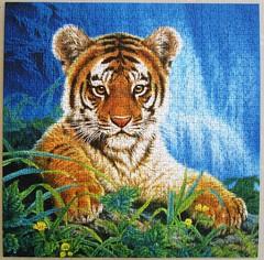 Kleiner Tiger / Little Tiger (Joh Naito) (Leonisha) Tags: tiger puzzle jigsawpuzzle