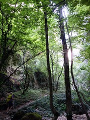 """Woodland in the Celano Gorge • <a style=""""font-size:0.8em;"""" href=""""http://www.flickr.com/photos/41849531@N04/19747047092/"""" target=""""_blank"""">View on Flickr</a>"""