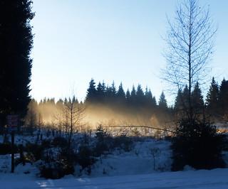 Au petit matin en forêt du Ché