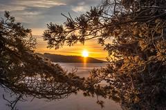 First Light (Fredrik Lindedal) Tags: winter winterland lake snow sweden sverige sky skyline sun sunlight morninglight morning blue orange tree trees nikon fredriklindedalse cold landscape nature visitsweden glow