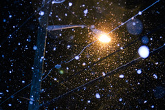 First snow of the season (pronoobphoto) Tags: snow light lights bokeh winter frost contrast nature cold weather